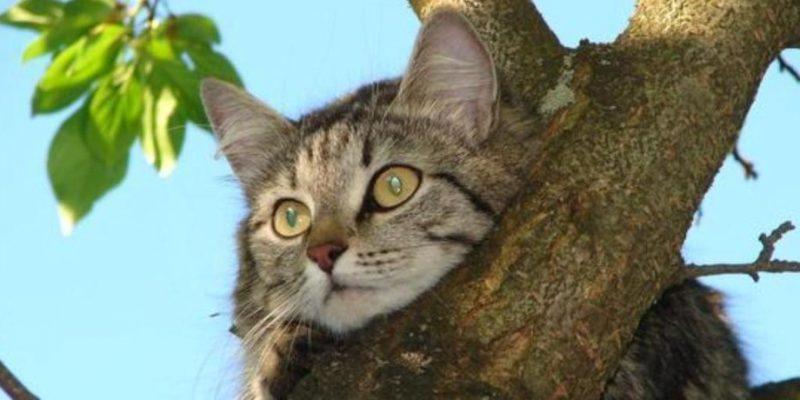 Снять кошку с дерева для нас не проблема